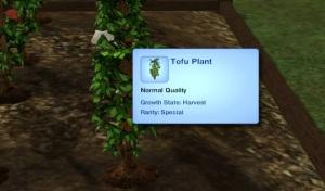 pla_tofu